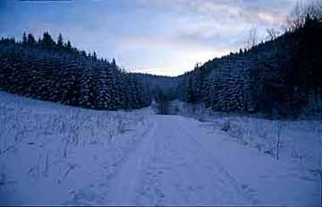 Zimní cesta směr Rejvíz